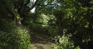 Frome Mill Walk