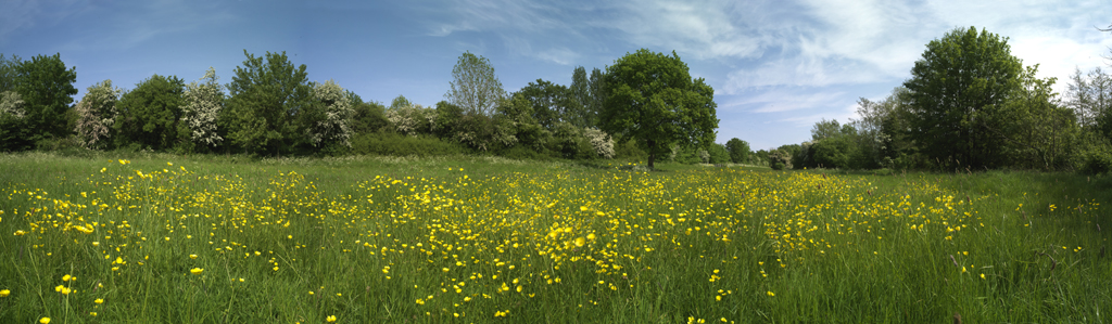 Rodden Meadow
