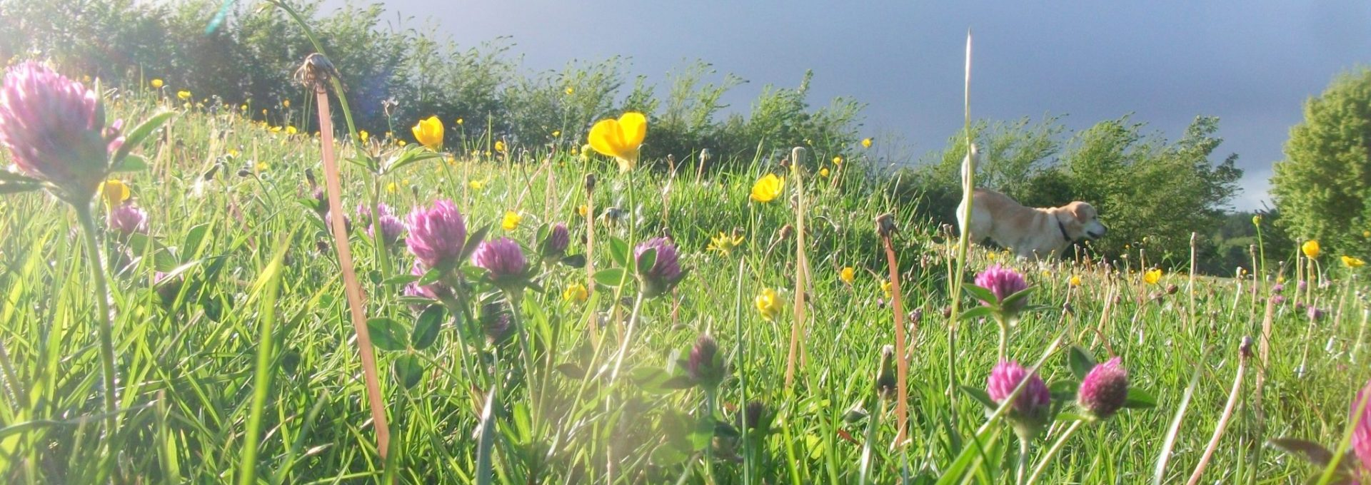 Whatcombe flowers green spaces