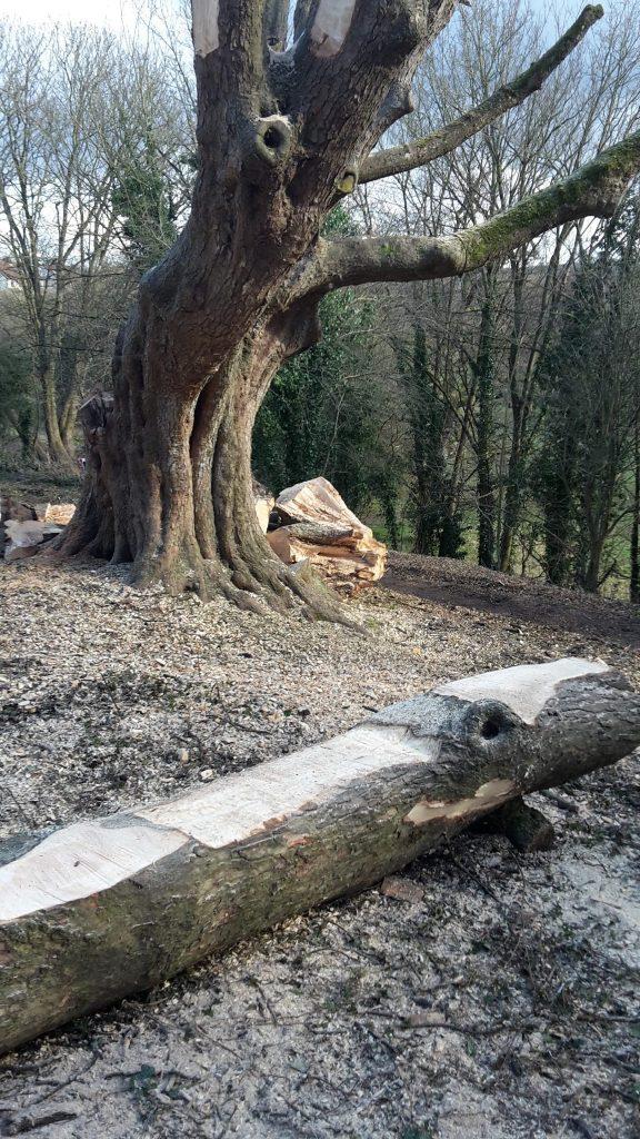 Tree at Millennium Green