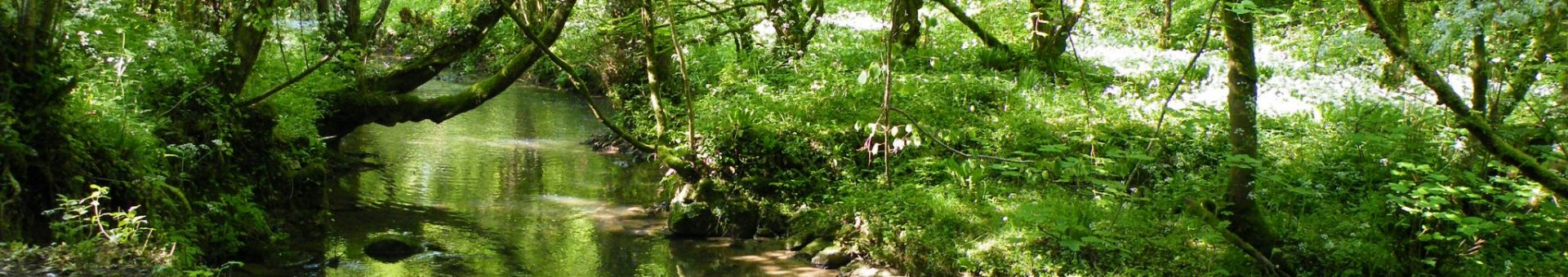 Photo of a river in woodland during summer.