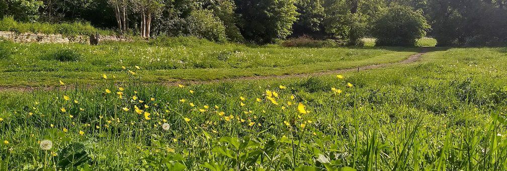 Photo of Rodden Meadow in summer.