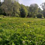 Help shape Rodden Meadow